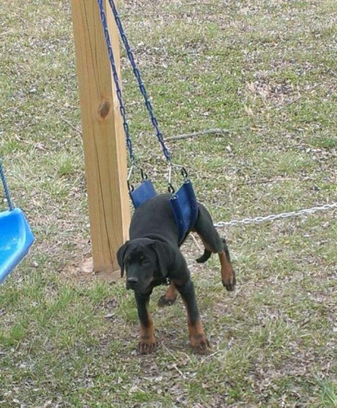 Cães que se arrependeram do que fizeram