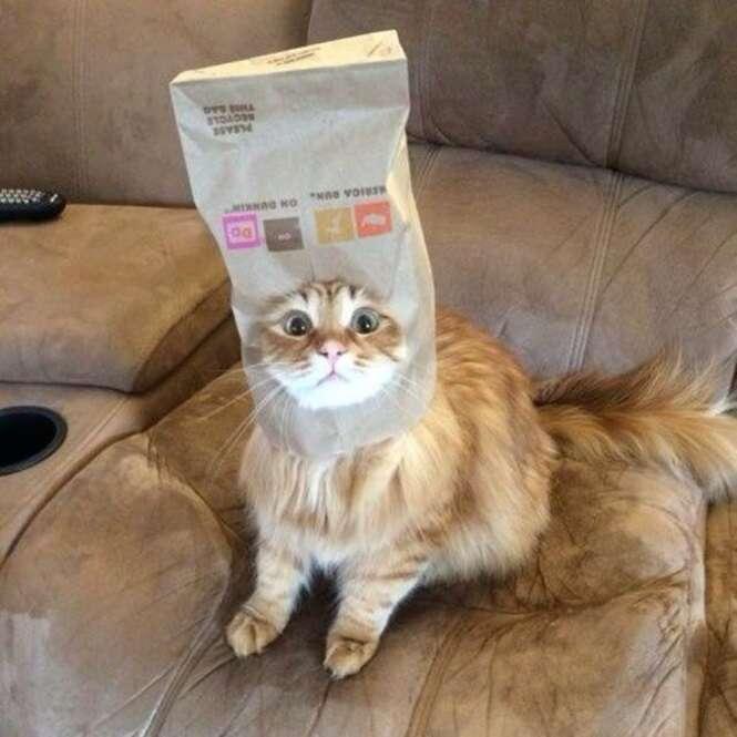 Gatos que são mestres no disfarce
