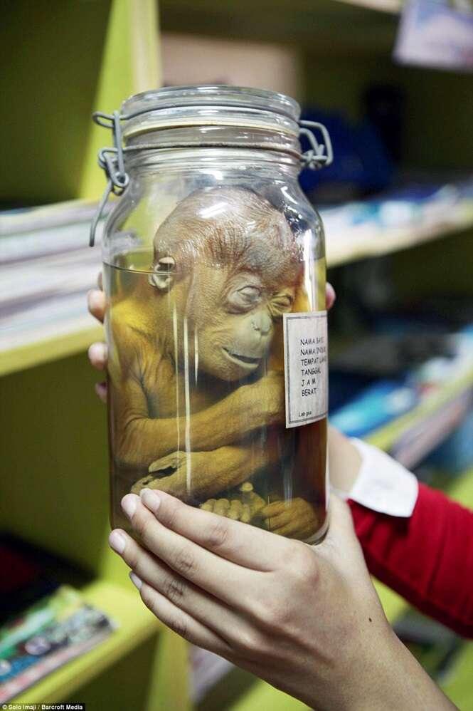 Macaco bebê conservado em frasco choca visitantes de parque