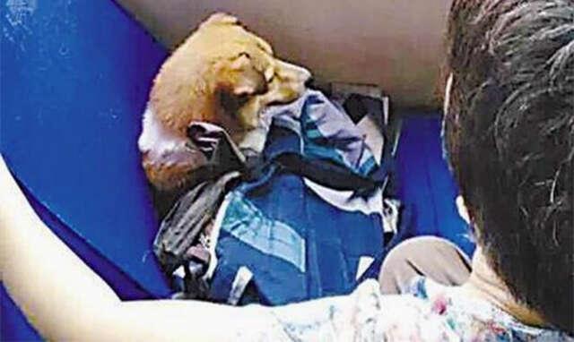 Passageiros ficam revoltados com mulher que impediu que idosos usassem assento de ônibus para deixar seu cão deitado
