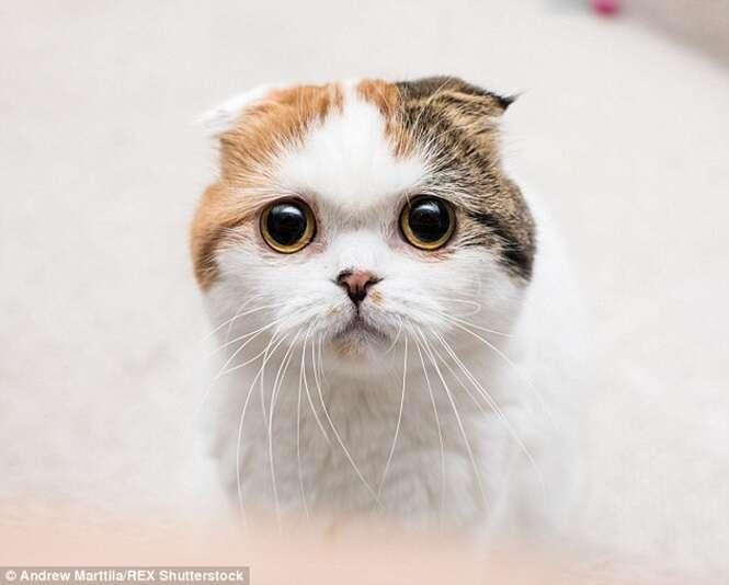 Fotógrafo cria série de fotos de gatos demonstrando diferentes emoções