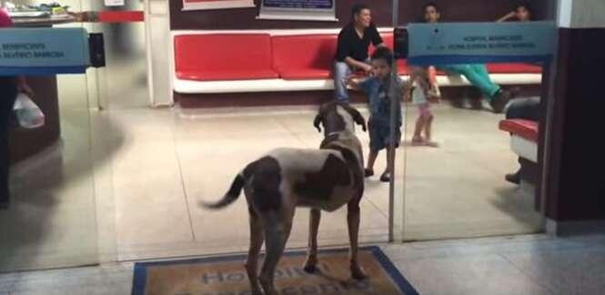 Cão fiel permanece de guarda na entrada de hospital esperando sua dona idosa