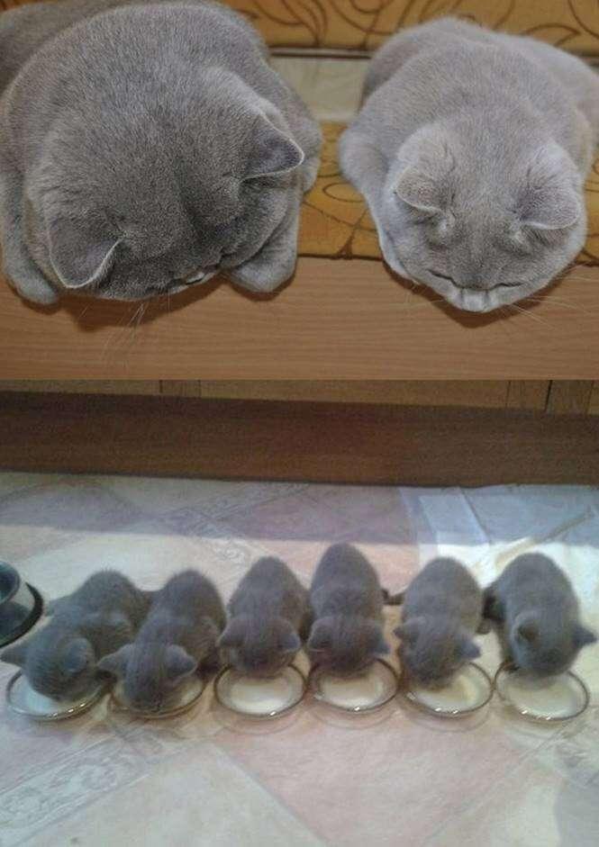 Gatos com filhotes