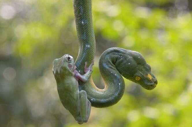 Sapo e cobra são fotografados brincando juntos