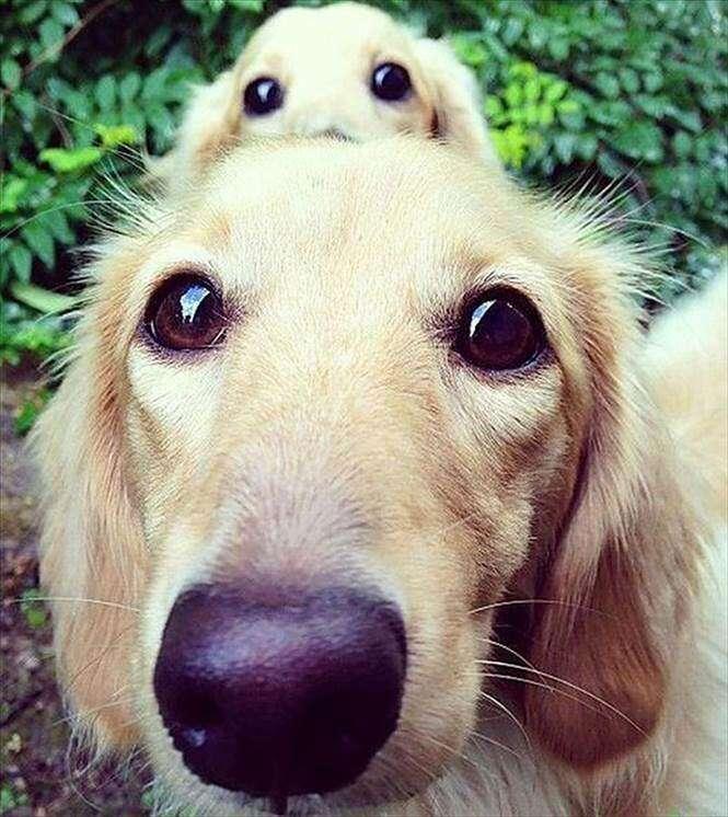 Cães com seus filhotes
