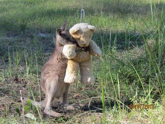 Imagem de canguru bebê órfão abraçado a ursinho de pelúcia comove na web