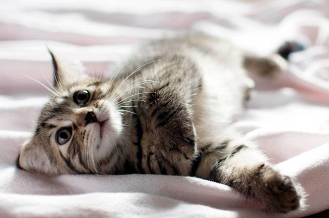 Gato morre após ser forçado a cheirar cocaína durante festa