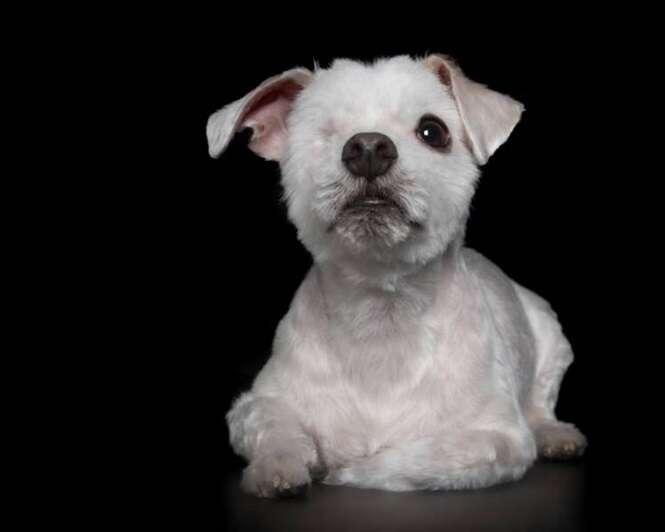Animais com deficiência em série perfeita de imagens