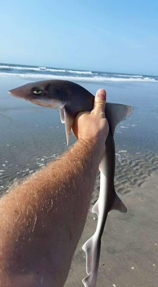 """Filhote de tubarão com expressão de """"tédio"""" se torna sensação na web"""