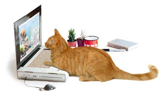 Notebook para gatos