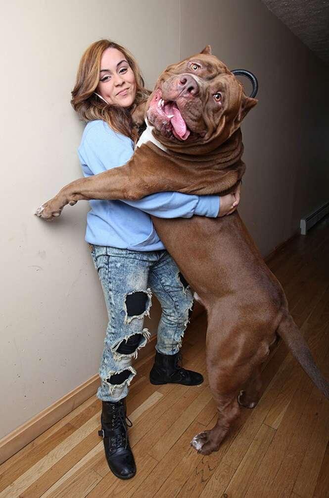 Cães que cresceram demais e assustaram até seus donos