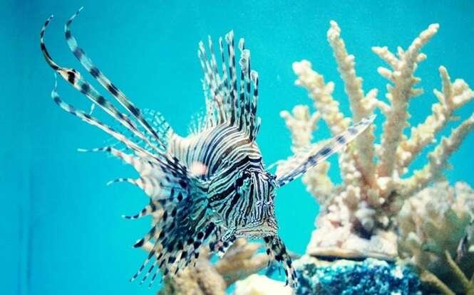 Peixes que destroem a Terra devido à ação humana