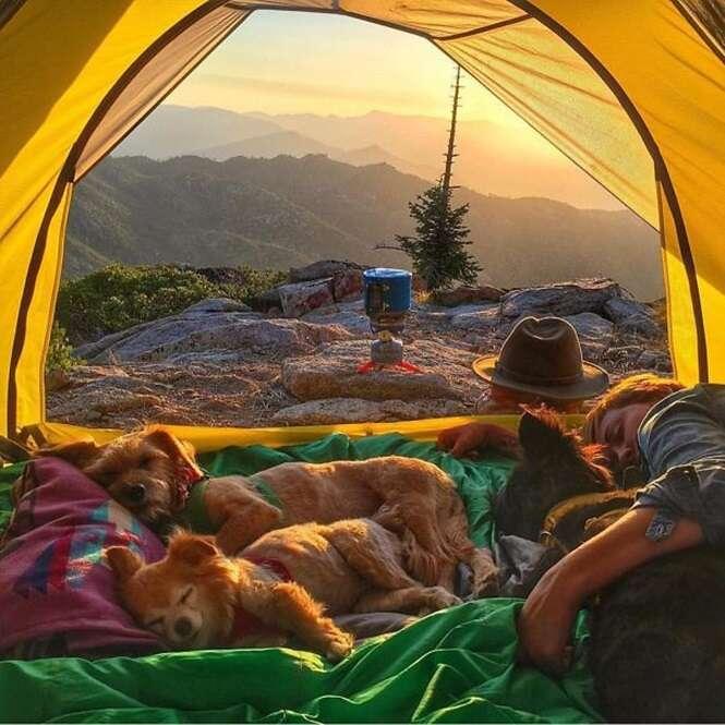 Fotos de camping com cães vão te inspirar a passear com seu bichinho
