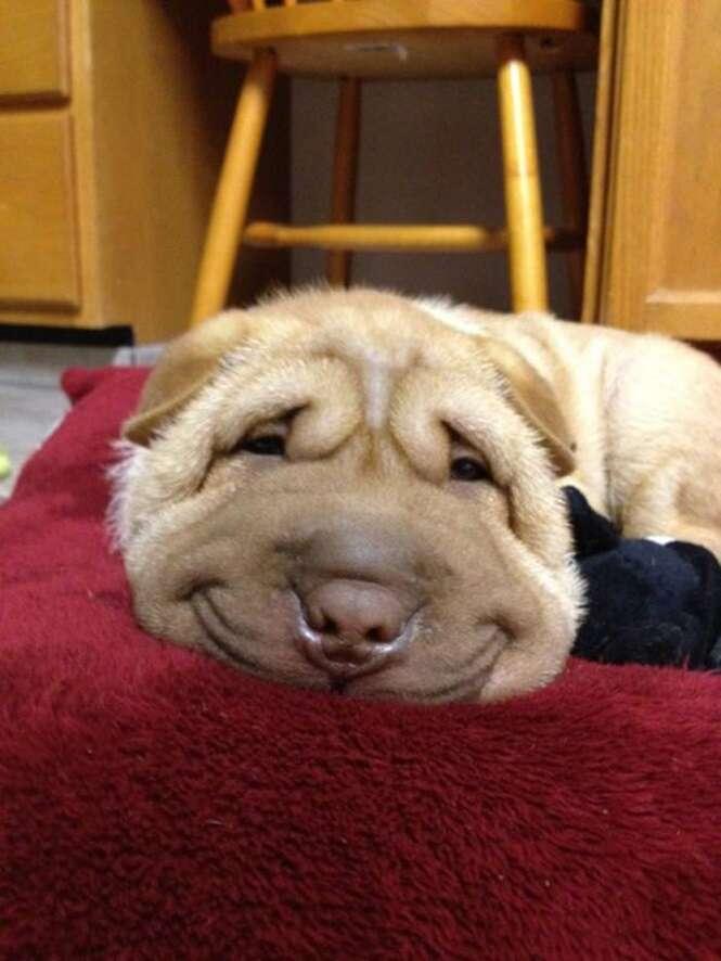Cães mais felizes da internet