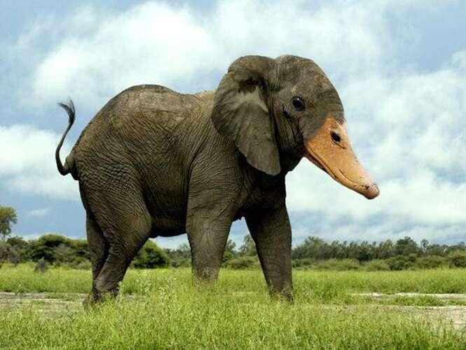 Animais híbridos com ajuda do Photoshop