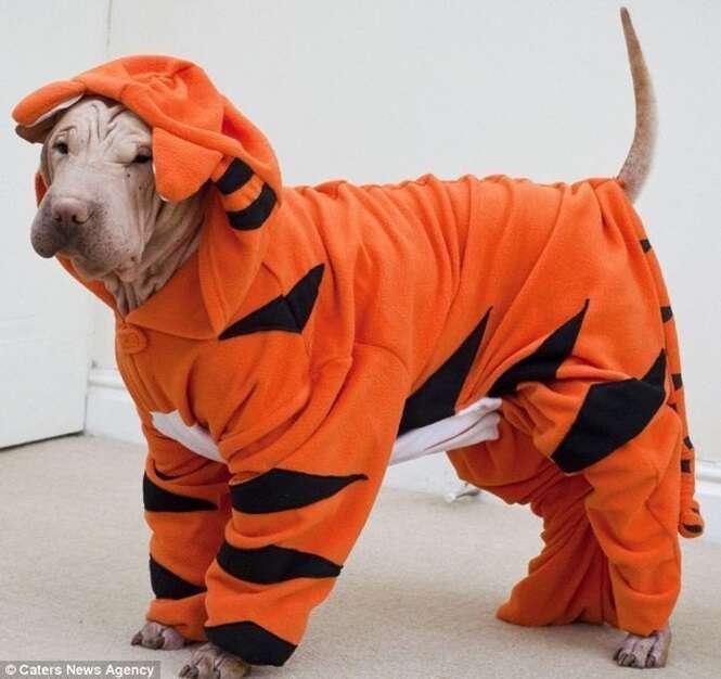 Animais fofos usando pijamas