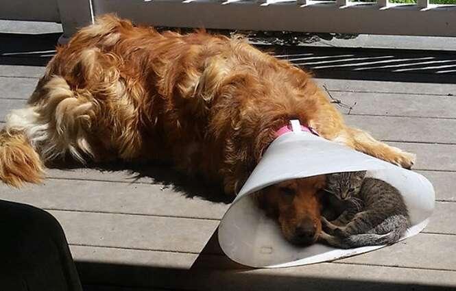 Fotos adoráveis provando que cães e gatos podem se dar bem