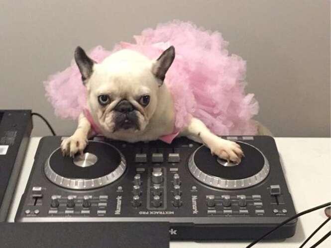Animais que sabem aproveitar uma festa