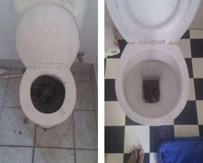 Aparição de cobras gigantes em vasos sanitários deixa moradores em pânico