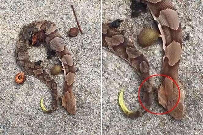 Vídeo nojento mostra momento em que cobra morta se move após vermes começarem sair de seu corpo