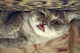 Gatos sendo... gatos