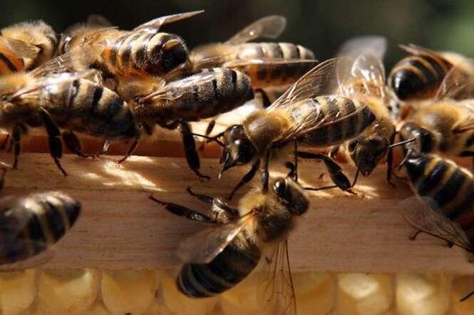 Jogador de golfe morre ao ser picado por abelha enquanto procurava por bola no campo