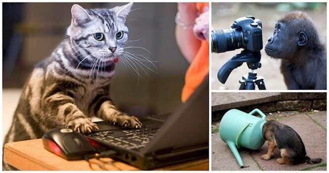 Animais tão curiosos quanto os humanos
