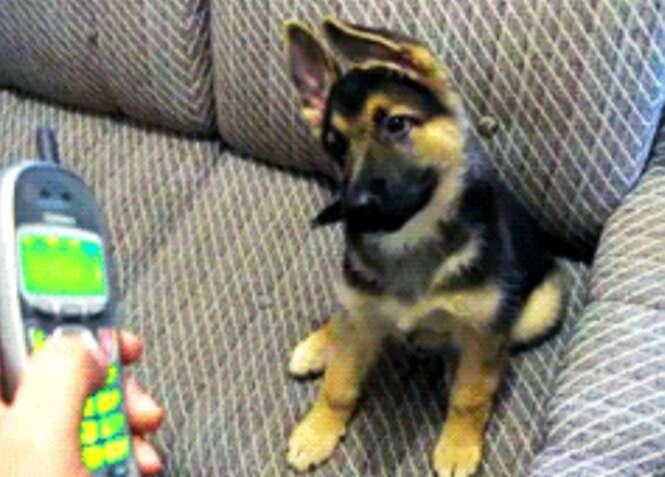 Cães que estão confusos com a vida