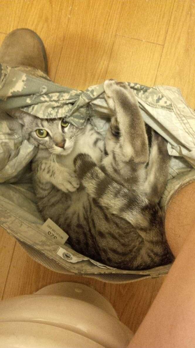 Gatos que adoram se esconder em cuecas e calcinhas