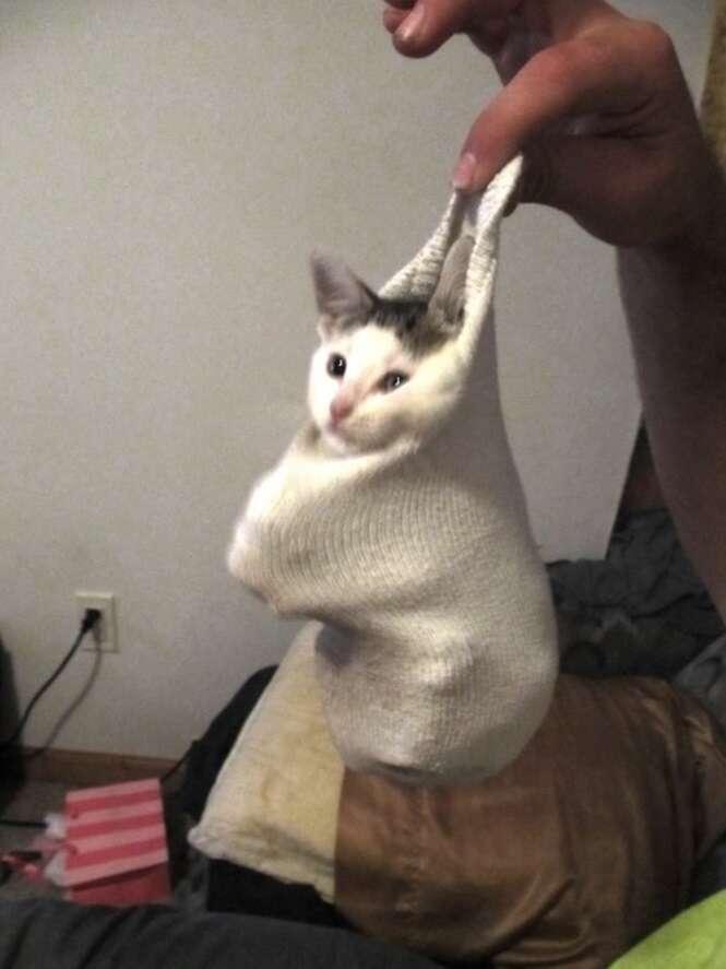 Gatos fofos e confusos dentro de meias
