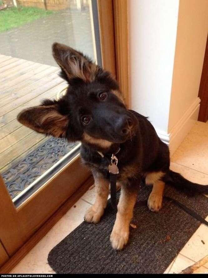 Cães que ficam ainda mais fofos quando inclinam a cabeça