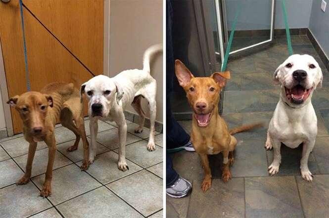 Cães famintos encontrados em situação precária recebem amor e uma nova vida
