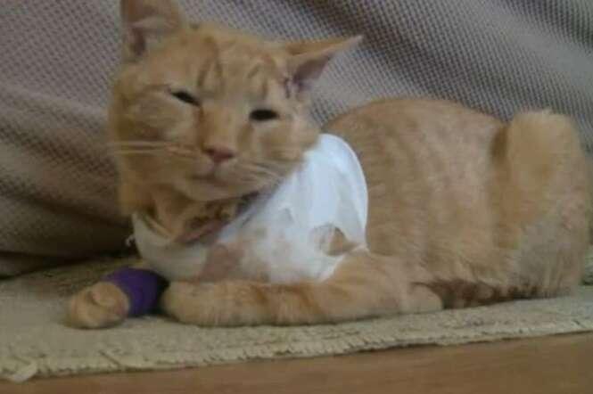 Gato herói salva vida de menino ao ser baleado no lugar da criança