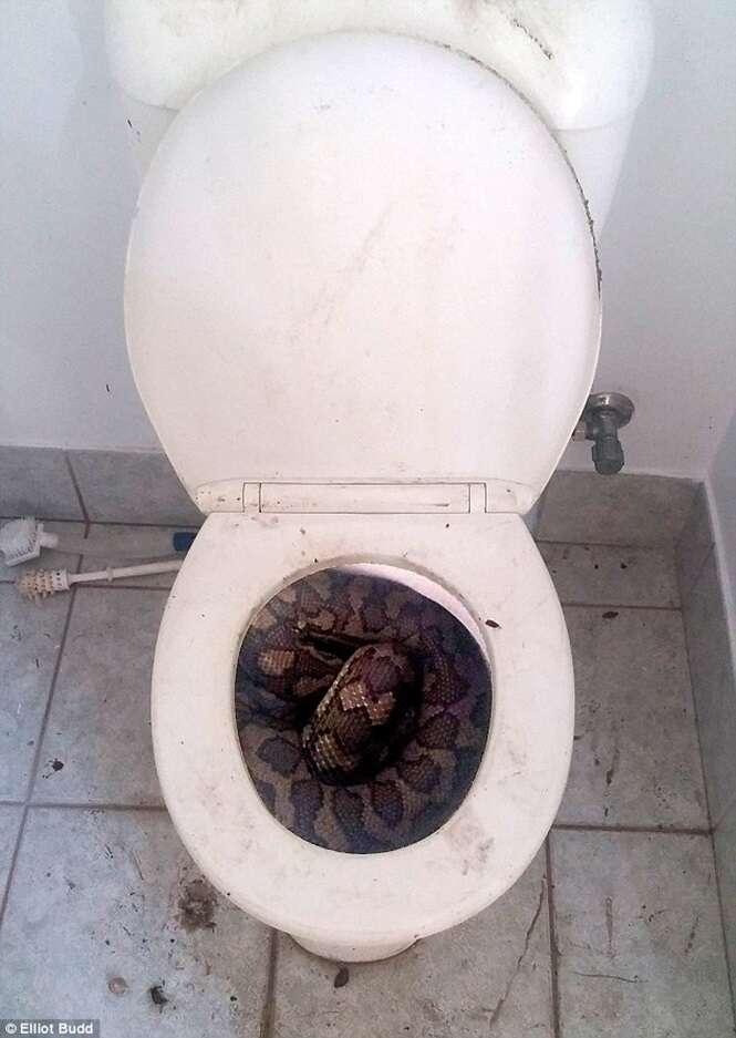 Homem encontra enorme cobra no vaso sanitário quando ia usar o banheiro