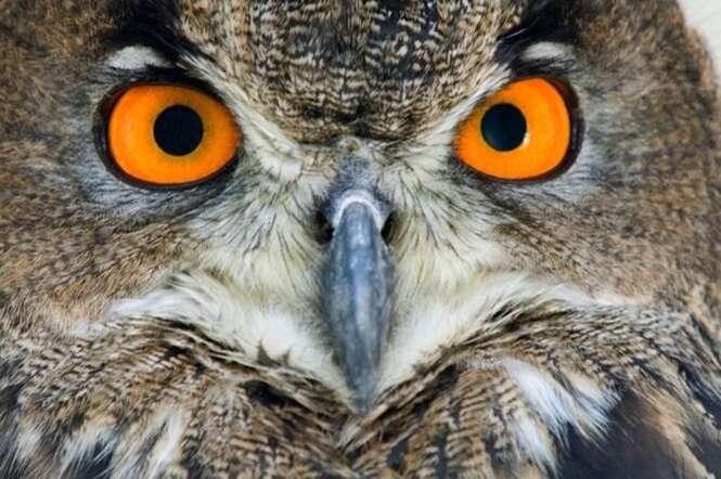 Você consegue identificar um animal apenas por seus olhos?
