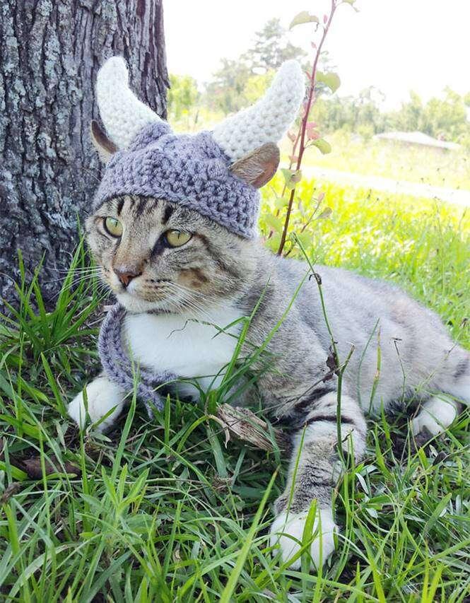 Chapéus para animais