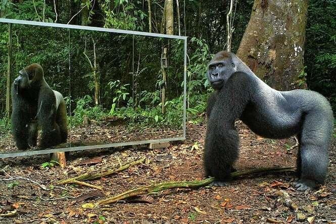 Fotógrafo coloca espelho gigante em mata e filma reação de animais selvagens diante da própria imagem