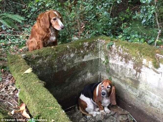 Cão fiel passa uma semana ao lado de amigo preso em reservatório