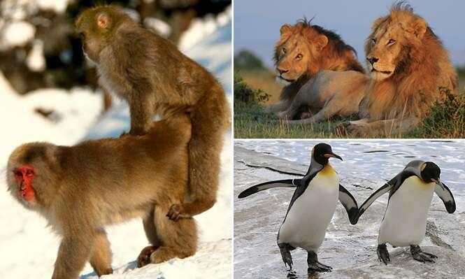 Animais que praticam a homossexualidade