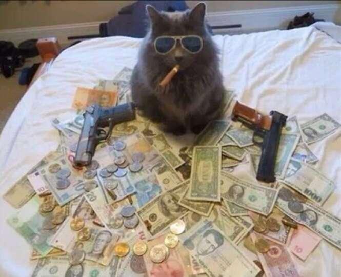 Gatos esbanjando riqueza