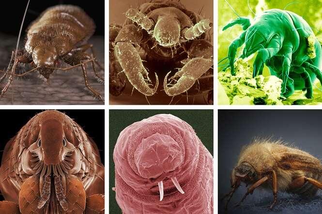 Criaturas bizarras que vivem dentro de sua casa e você não sabia