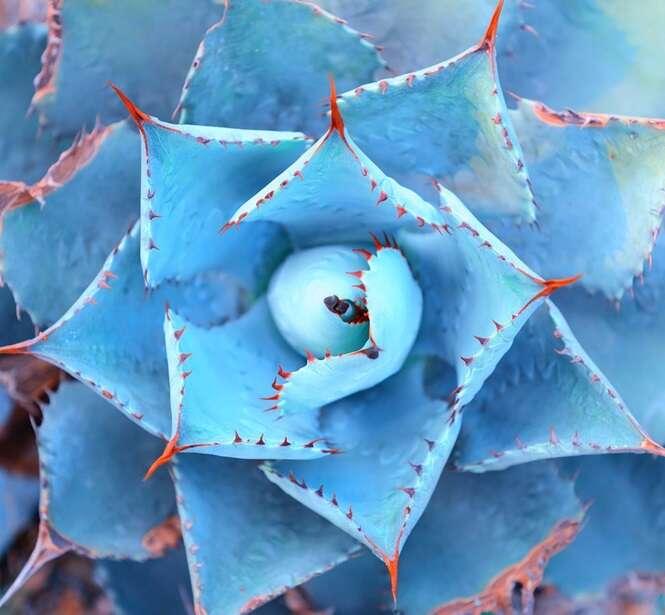 Imagens que demonstram a simetria da natureza