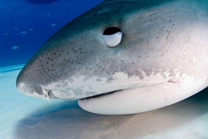 Homem escapa de ataque de tubarão arrancando olhos do predador
