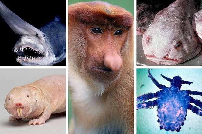 Os animais mais feio do mundo