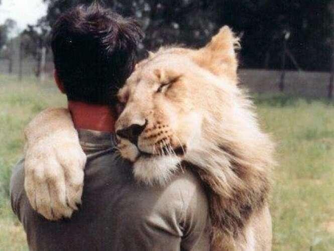 Lindas fotos de animais abraçando seres humanos