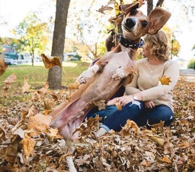 Cães arruinando fotografias