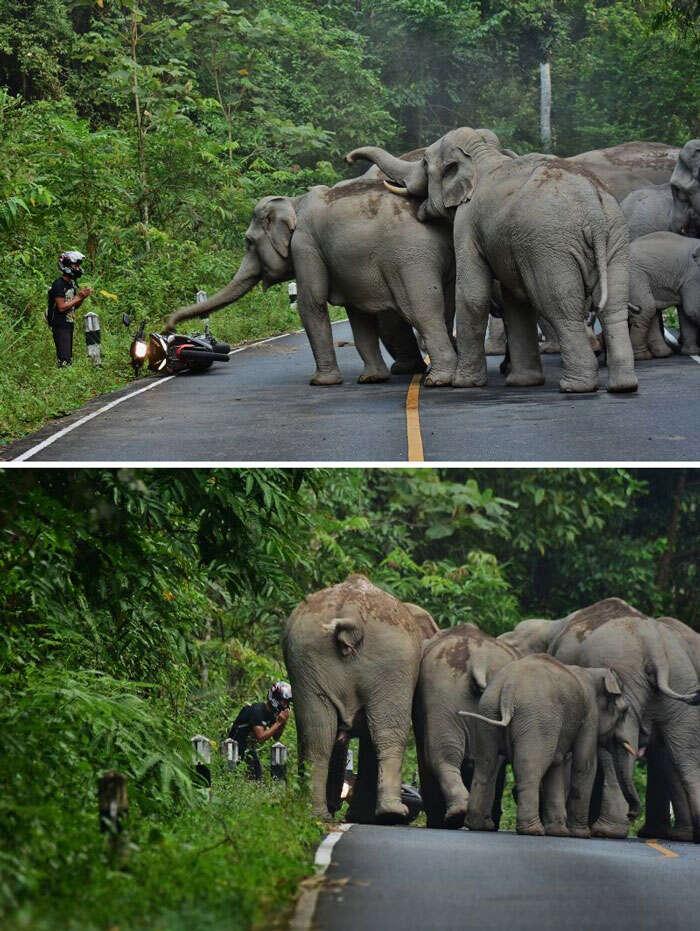 Homem pede desculpas a elefantes depois de perturbá-los com sua moto