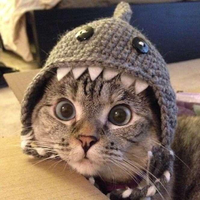 Conheça a gatinha que tem mais de 2 milhões de seguidores no Instagram