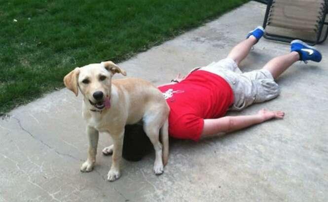 Vezes em que os cães não eram os melhores amigos do homem