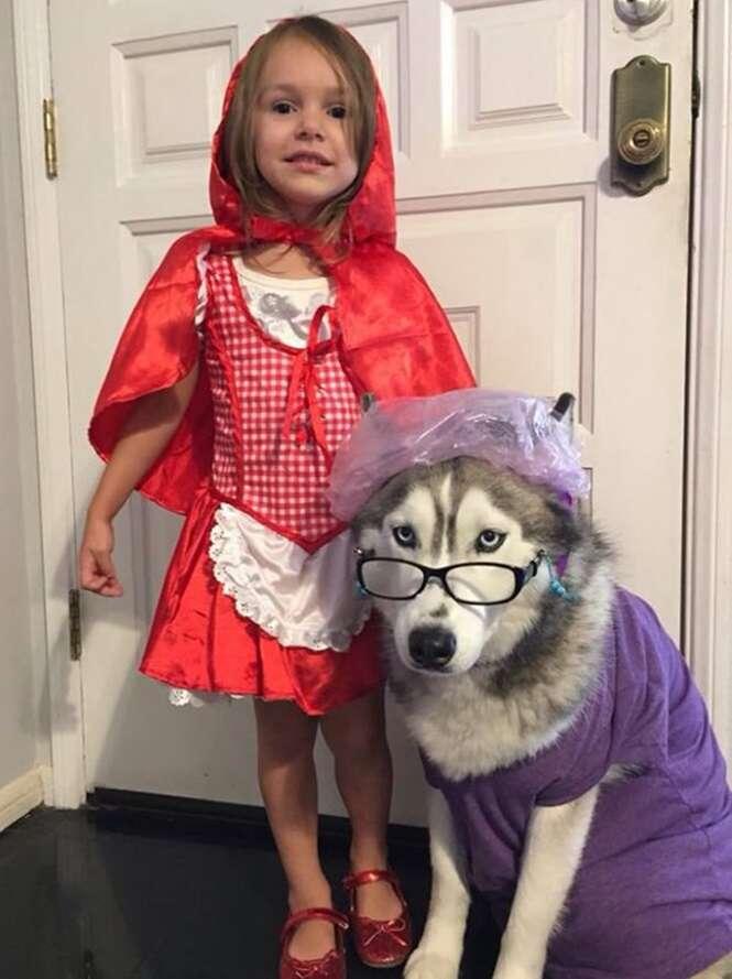 Cães usando trajes curiosos para o Halloween